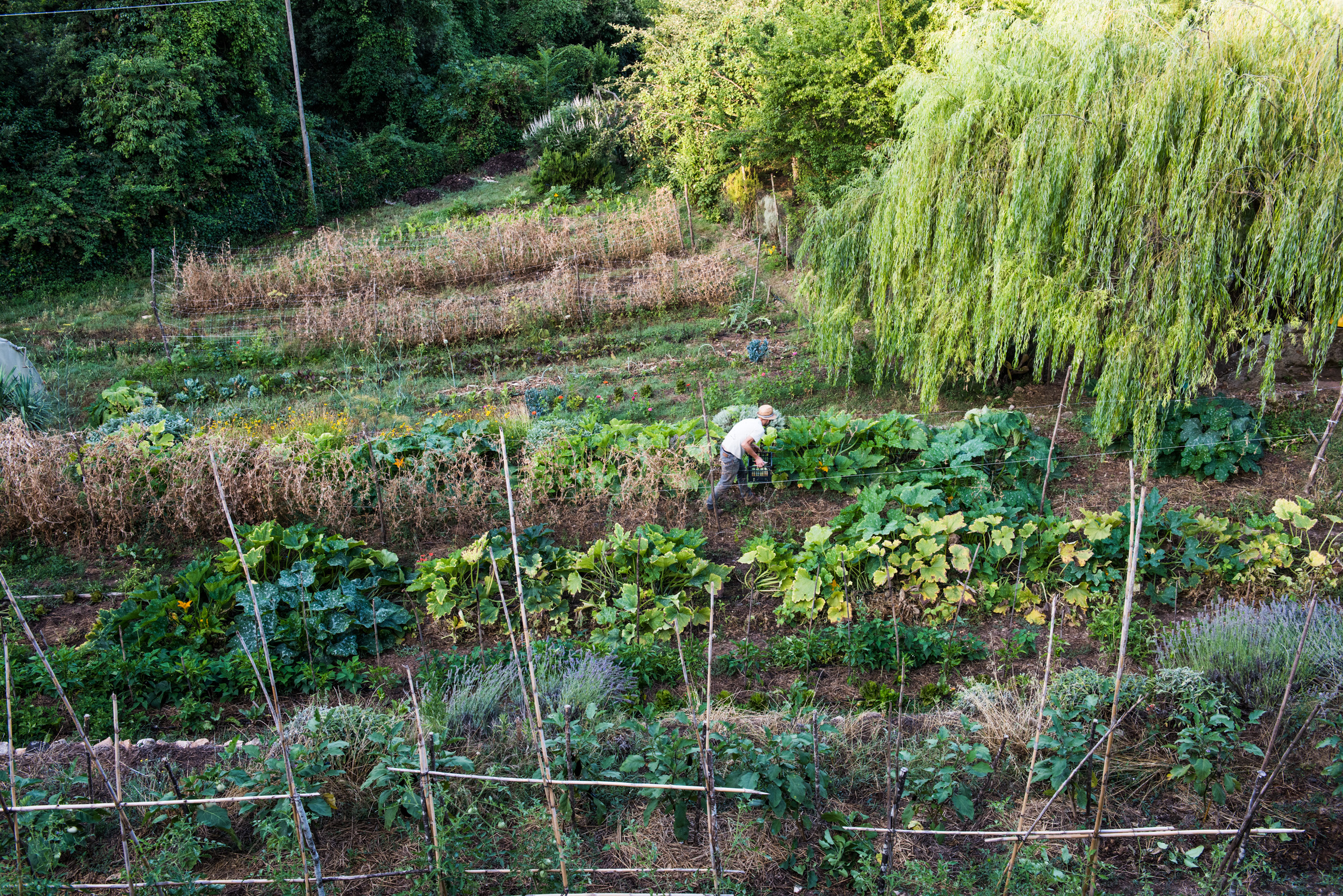 Villa vegetable garden
